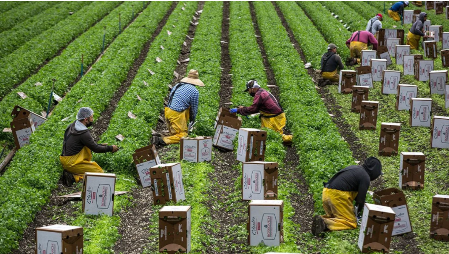 Essential Farmworkers Deserve Pesticide Protections